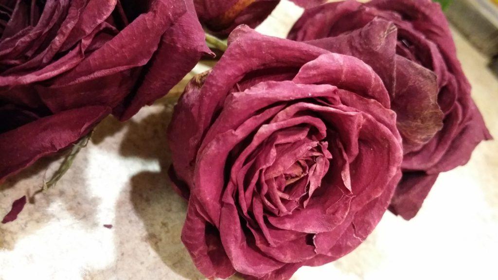 rose-581396_1920