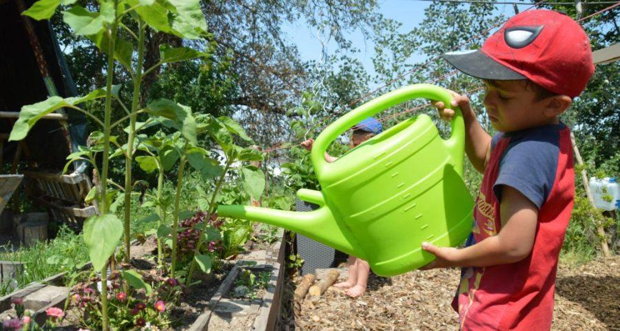 Pflanzengießen am Hochbeet